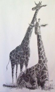 Richard D Burton: Giraffes - Pen and Ink (1968)