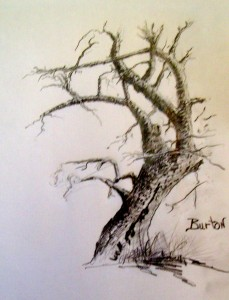 R. D. Burton: Knobby Winter Tree: Graphite Drawing